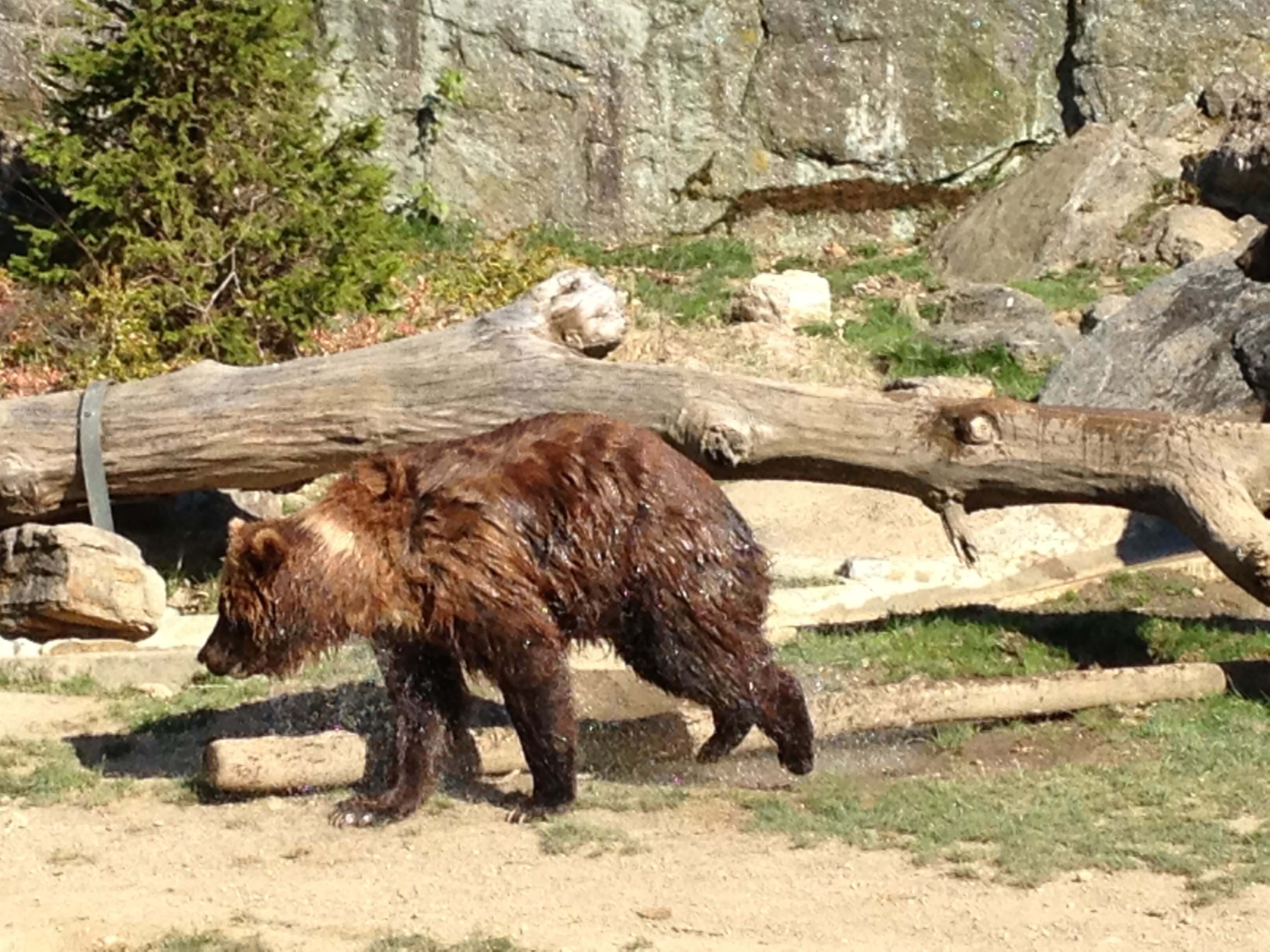 Bronx Zoo Bears