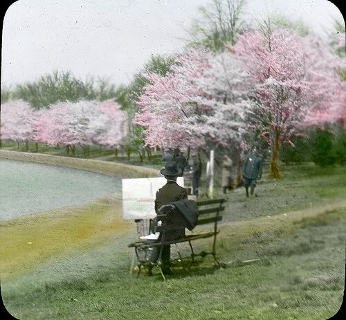 Cherry blossoms in bloom, Washington DC, probably in the 1920's (courtesy E.B. Thompson collection at DC Public Library on Flickr Commons)