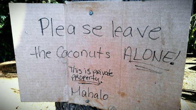 And don't bother the chickens, either; coconut warning sign at the shrimp trucks on Oahu North Shore (photo by Sheila Scarborough)