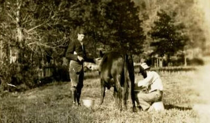 DH Lawrence milking Susan the cow at the DH Lawrence Ranch near San Cristobal and Taos, New Mexico