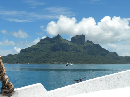 A Shark Excursion in Bora Bora