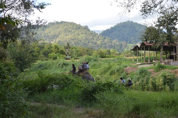 Caring for Elephants at the Maetaeng Elephant Park in Chiang Mai, Thailand
