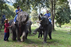 Mahout training - how to ride an elephant