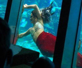 A Weeki Wachee mermaid by the glass.