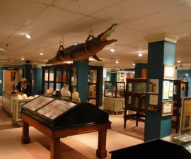 A look at the first room of the Lightner Museum in St. Augustine, FL (including a gator hanging from the ceiling).