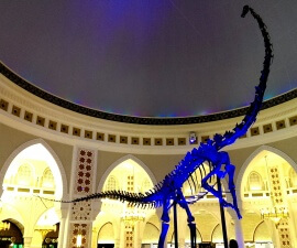 Diplodocus Longus dinosaur skeleton found in Wyoming on display at Dubai Mall UAE (photo by Sheila Scarborough)
