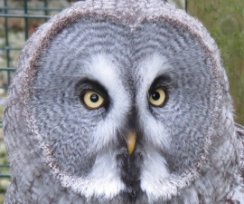 Falconry_Course_Swinton_Park_Bird_of_Prey_Centre_Willow