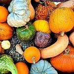 Fall weekend in Dallas TX with colorful autumn gourds at the Dallas Arboretum (photo by Sheila Scarborough)