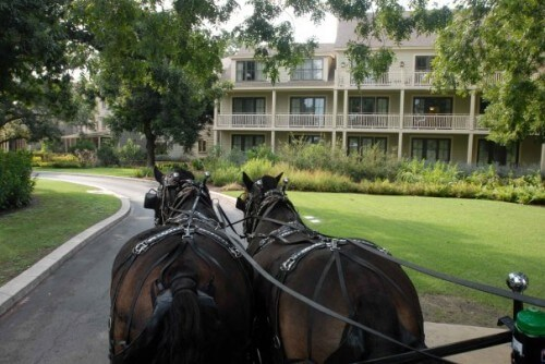 Hyatt Lost Pines horses take guests out (courtesy Hyatt Lost Pines on Facebook)
