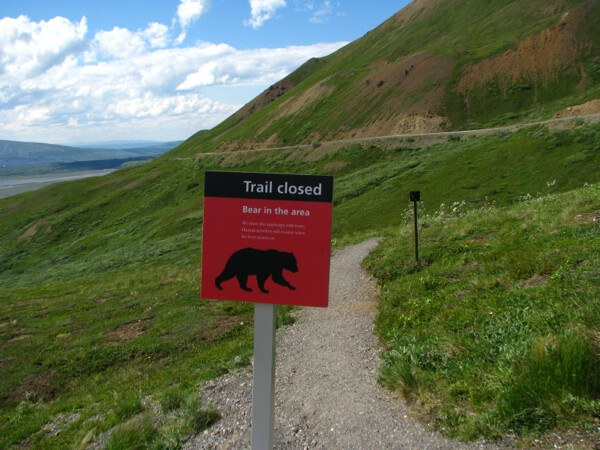 Trail Closed Grizzly Bear Denali