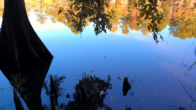 Reflections at Caddo Lake State Park northeast Texas (photo by Sheila Scarborough)