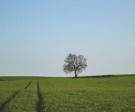 tree, country, landscape united state
