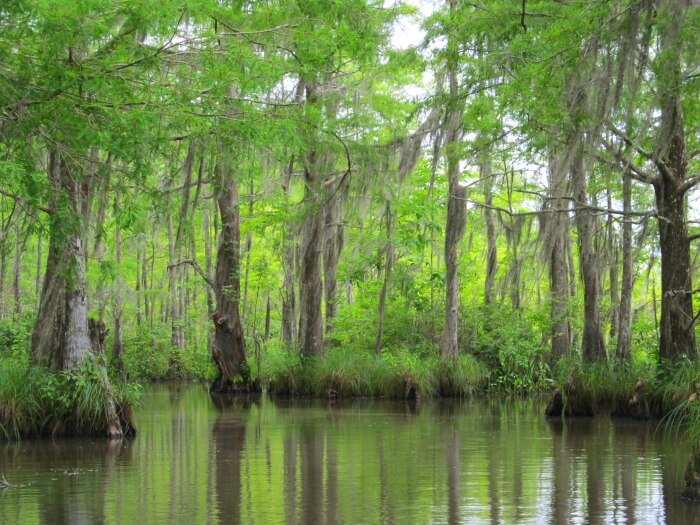 In the Honey Island Swamp on a Cajun Encounters Louisiana Swamp Tour
