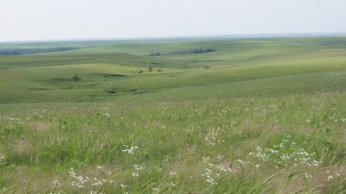 Prairie in summer (courtesy Tallgrass Prairie National Preserve on Facebook)