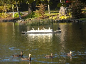 Titanic with Ducks in Halifax Public Gardens