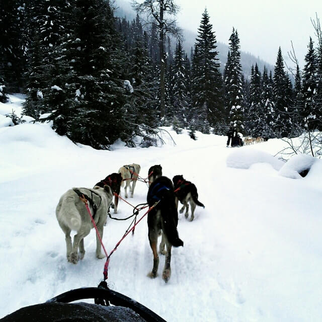 View from the dogsled near Jasper Alberta (photo by Sheila Scarborough)
