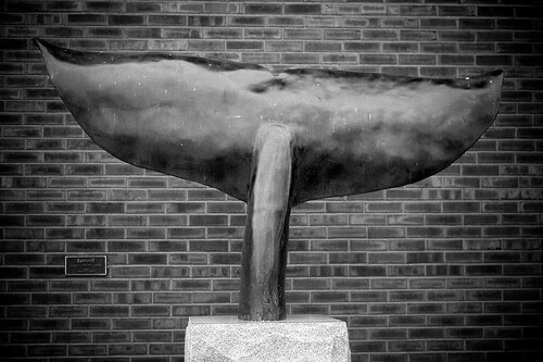 Moby Dick Marathon - Whale tail at entrance to New Bedford Whaling Museum, MA (photo courtesy cmiper at Flickr CC)