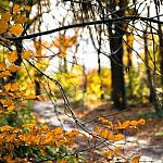 autumn woods path travel inspiration