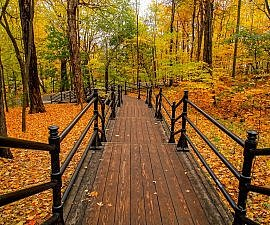 canada thanksgiving autumn boardwalk