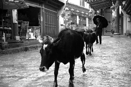 Clearing the real streets of Shangri-La, China (formerly Zhongdian) (photo courtesy Ed-meister at Flickr CC)