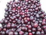 My own recent huckleberry harvest