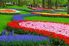 Swirls of color at Keukenhof Gardens, the Netherlands (courtesy Keukenhof Gardens)
