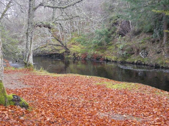 autumn colors highland scotland leaves