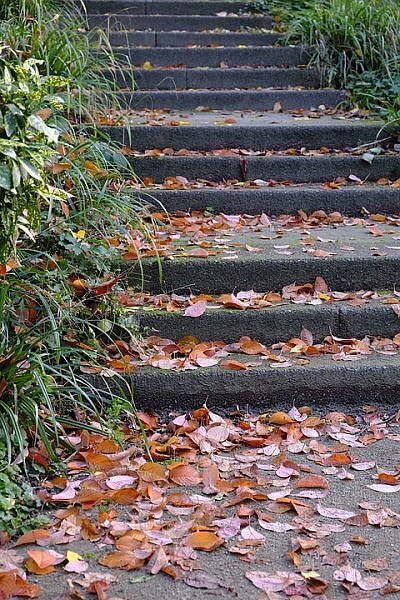 autumn leaves on stairs community