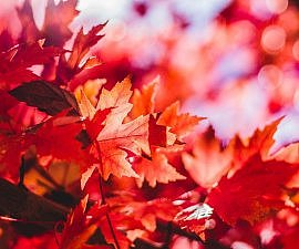 canada music maple leaf