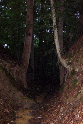 The original Natchez Trace dirt path called the Sunken Trace near Port Gibson, Mississippi (photo by Sheila Scarborough)