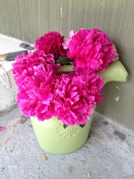 Peonies in a watering can