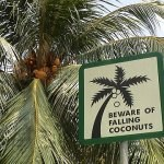 singapore-coconuts-480