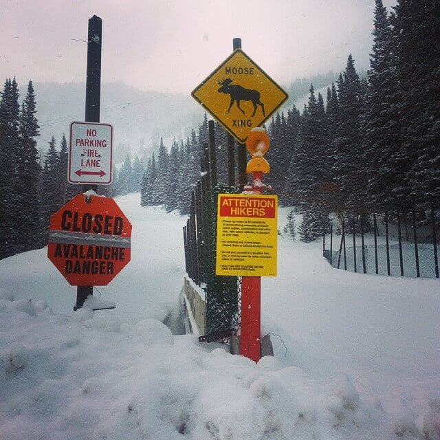Avalanche warning and moose crossing signs